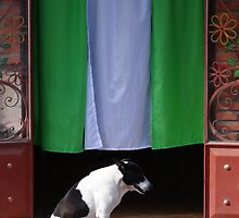 The dog by Bernhard Matejka