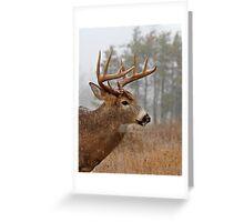 Bullet Buck Greeting Card