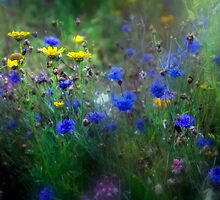 Cornflower Meadow by Ann Garrett
