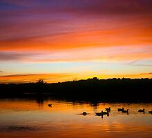 Silhouettes at dusk by Gary Rayner