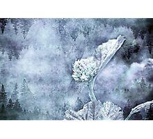 Miraculous Winter Photographic Print