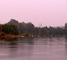 Whitlingham great broad nature reserve by Gary Rayner