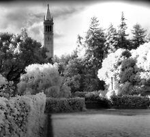 Sather Tower, Berkeley California by Rodney Johnson
