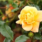 Yellow rosebud by tdash