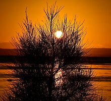 Tuggerah Silhouette. by Julie  White