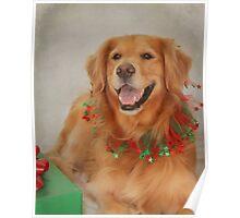Abigail's Christmas Portrait Poster