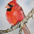 Winter cardinal by lanadi