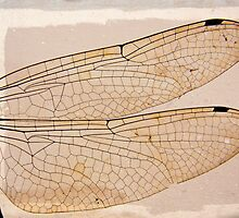 dragonfly by Floralynne