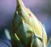 Winter Bud by Deborah Crew-Johnson