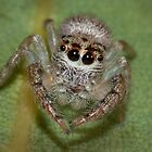 Small Spider by Keith Smith