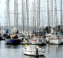 Rushcutters Bay Moorings. by George Petrovsky