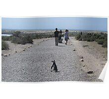 Caution: Penguin Crossing Poster