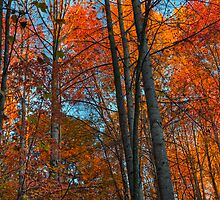 Autumn Woods by jimcrotty