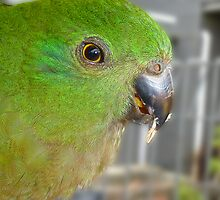 Green Parrot by PollyBrown