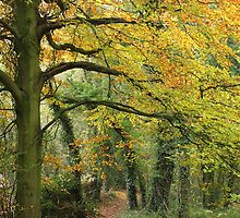 Priory Wood in autumn by Jane Corey