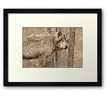 Wolf in Camo Framed Print