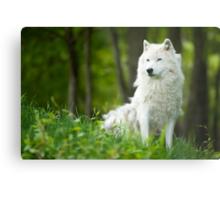 Arctic Wolf Shedding Winter Coat Metal Print