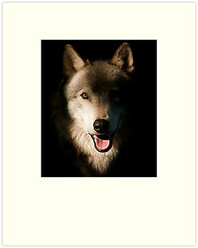 Timber Wolf Portrait by Bill Maynard