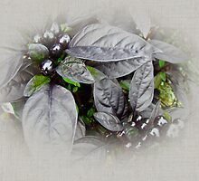 Silver Leaves and Berries by MotherNature