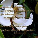 &quot;Magnolia Blossom&quot;~Psalm 103:13-15 by franticflagwave