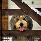 Let Me Out! by Paul Thompson Photography