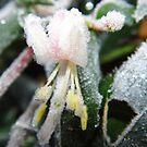 Frosty Honeysuckle by WildestArt