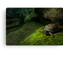 Box Turtle at Old Man's Cave Canvas Print