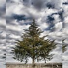 Lone Tree iPhone 4 Case by Warren Paul Harris