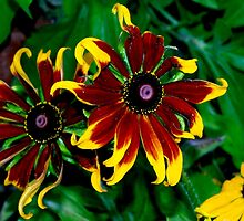 Special daisies by ♥⊱ B. Randi Bailey