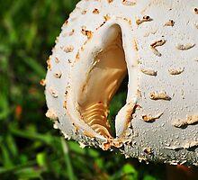 Mushroom Cap with Hole by joevoz