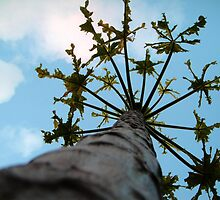 Up the papaya tree by islefox