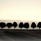 Lancaster Tree Line by reindeer