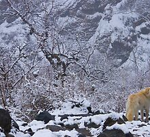Snow Dog, Annapurna Sanctuary by Mark Salkeld