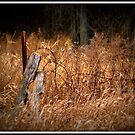 Old Fencing by BarbL