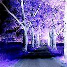 Purple Road by Jane Neill-Hancock
