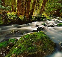 Little Fisher River by Kevin McGennan