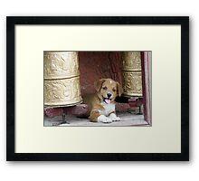 Tikse Puppy Framed Print