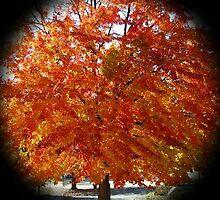 WeatherDon2.com Art 132 by dge357