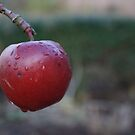 Red Apple on Branch by Colin Bentham
