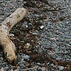 Pebble Beach with driftwood by Colin Bentham