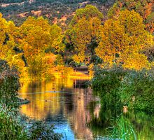 Trees around the lake by BigAndRed