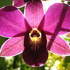 Purple Orchid  by Jennifer Jorgensen