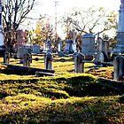Cedar Grove Cemetery by Shae1324
