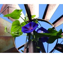 Morning Glory and the Windmill by TeaWater