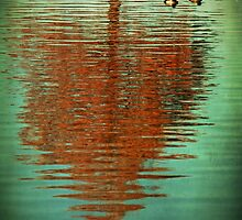 Cypress Reflection With Ducks by Lisa Holmgreen