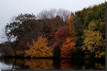 Autumn on the River by Barry Doherty