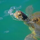 Sea Turtle Blowing a Bubble. by joevoz