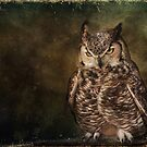 Great Horned Owl by Barbara Manis