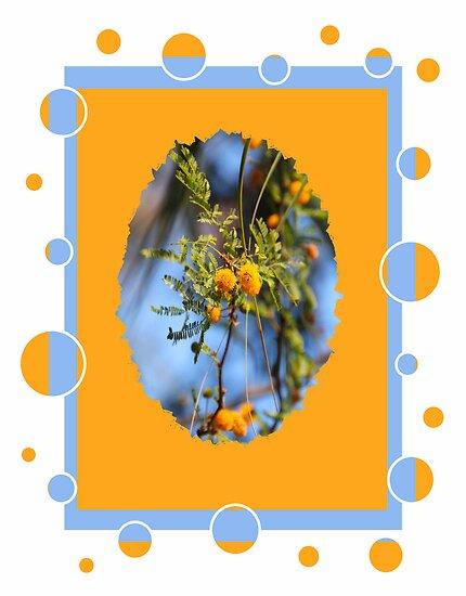 Sweet Acacia by Rosalie Scanlon