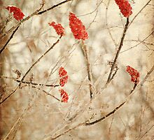 Winter Beauty by Izabela Mackay